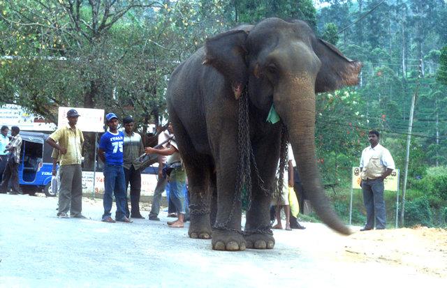 hatton_work elephant
