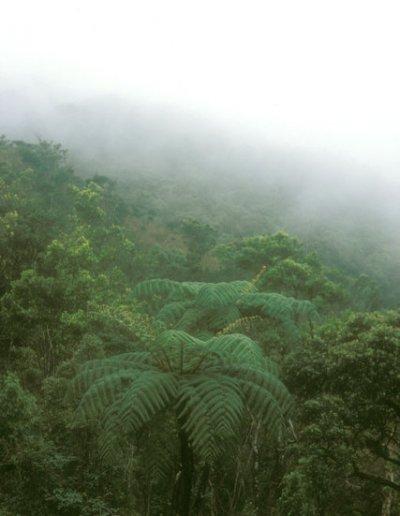 horton plains_vegetation