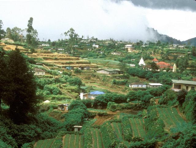 nuwara eliya_hill community