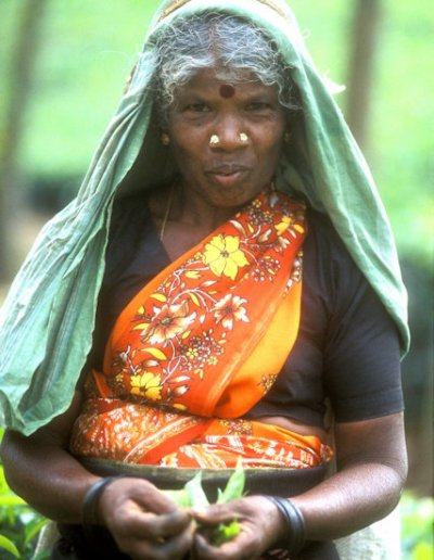 nuwara eliya_tea plantation worker_2