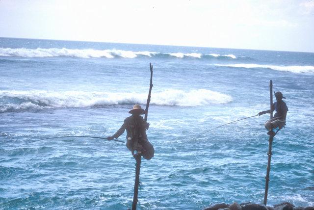 weligama_stilt fishermen