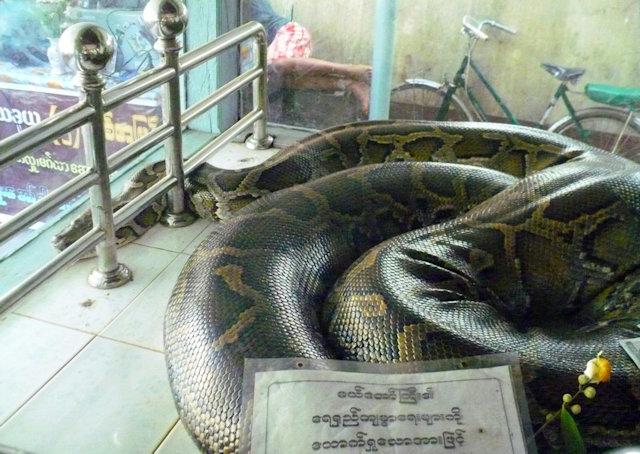pegu_snake pagoda